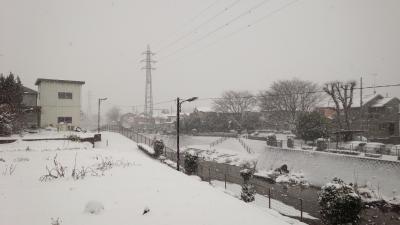 いろりの隣の畑が真っ白!!